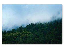 Slika na platnu – N302009