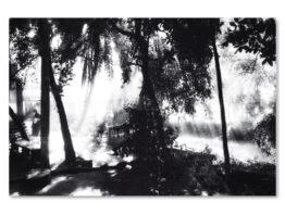 Slika na platnu – C302005