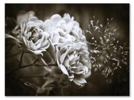 Slika na platnu – C403003