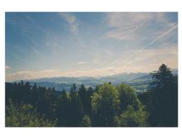 Slika na platnu – N302019